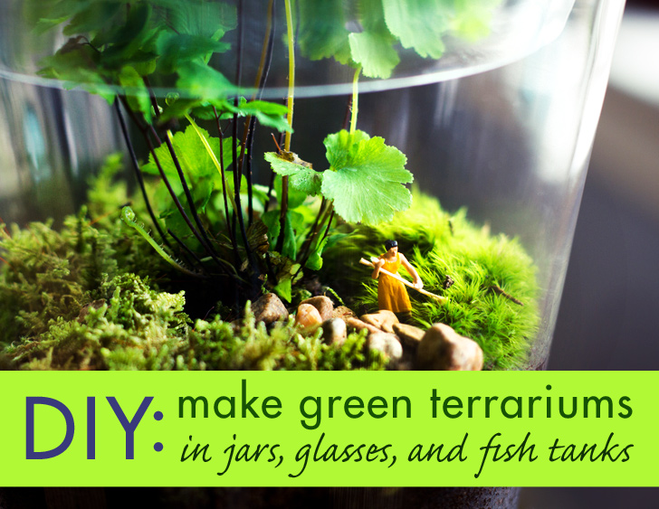 DIY-Glass-Terrariums