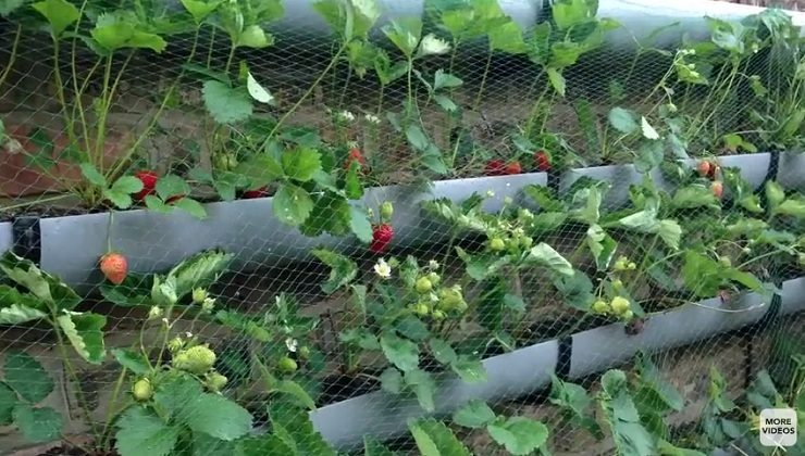 10 Simple Tips for a Successful Vegetable Garden